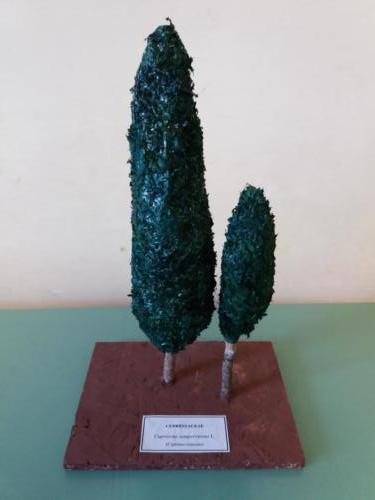 Modelli-Festa-dell-albero-nepi-stradella